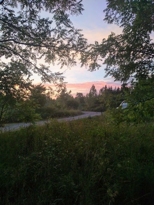 Image of a colourful evening sky, a backdrop to lots of trees and a rural setting.